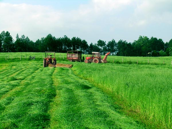 Where can I find a project on Pastoral farming ?