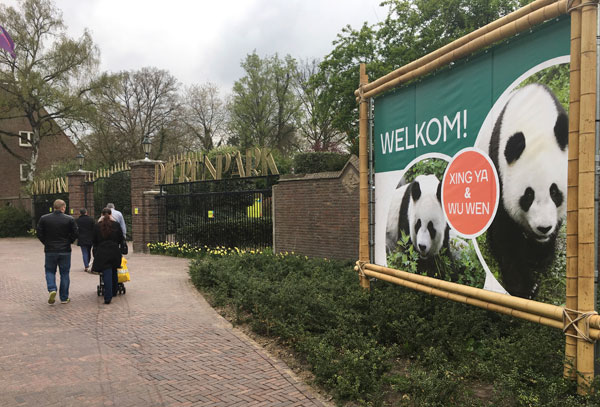 Pair of giant panda cubs from China greeted in Netherlands